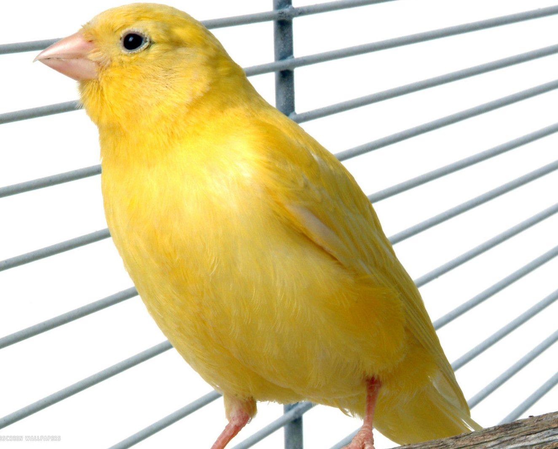 Aura Personaliti Warna Hijau Dan Kuning